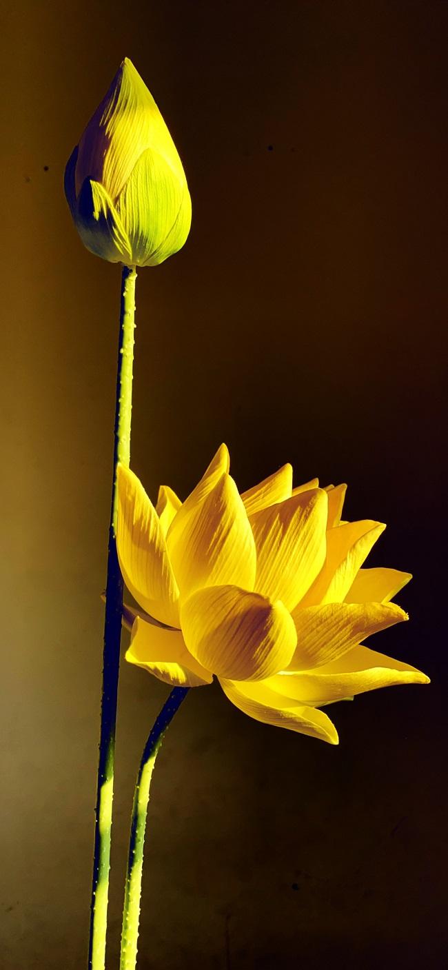 Ý nghĩa của hoa sen trong phong thủy